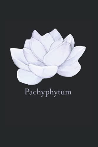 Pachyphytum Sukkulenten:...