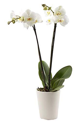 Florclick-Planta...