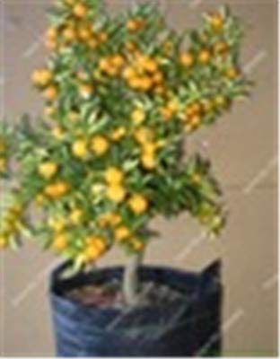 Bloom Green Co. 1bag = 50...