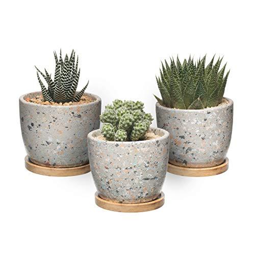 T4U Maceta de Cactus...