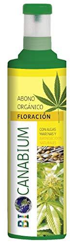 Flower CANABIUM ABONO...