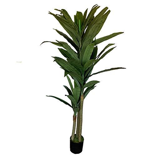 Wellhome Planta Tronco de...