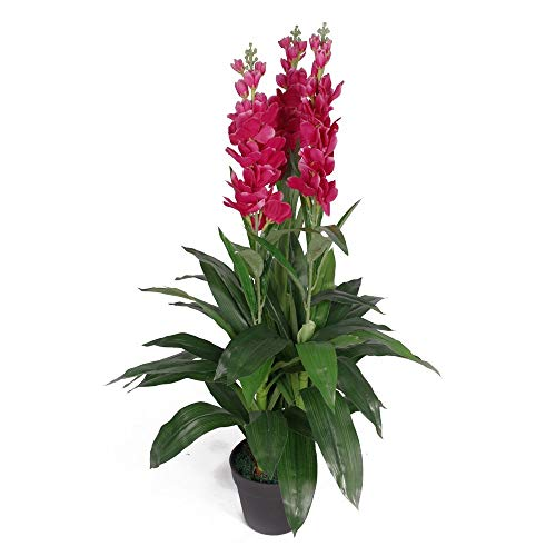 Leaf Planta de orquídea...