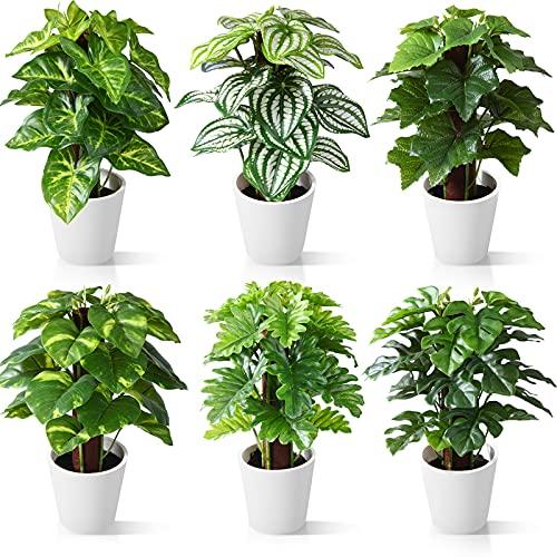 CROSOFMI Plantas...