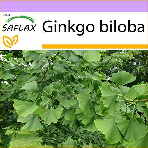 SAFLAX - Árbol de los...