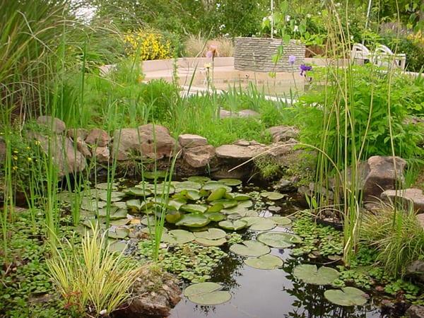 Tipos de plantas acu ticas plantas oxigenadoras Estanque natural como hacerlo