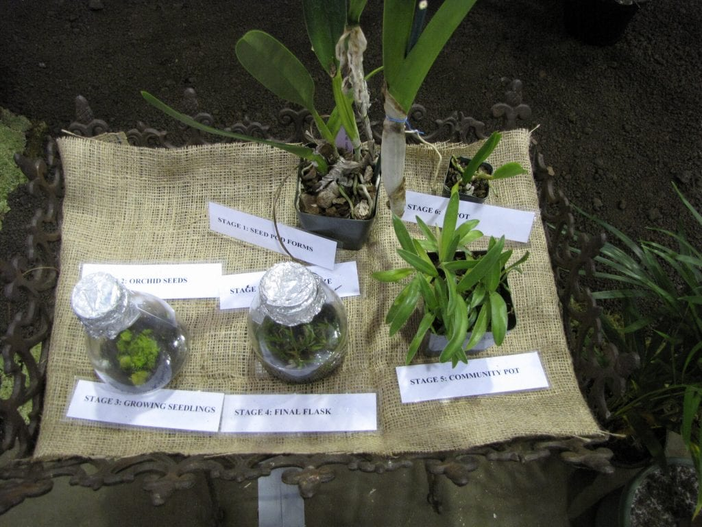 Cultivo in vitro de semillas de orquídeas