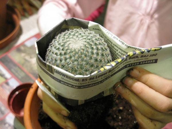 Cambio de Macetas y Trasplante de Cactus II