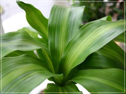 4 plantas de interior para principiantes for Plantas verdes de interior