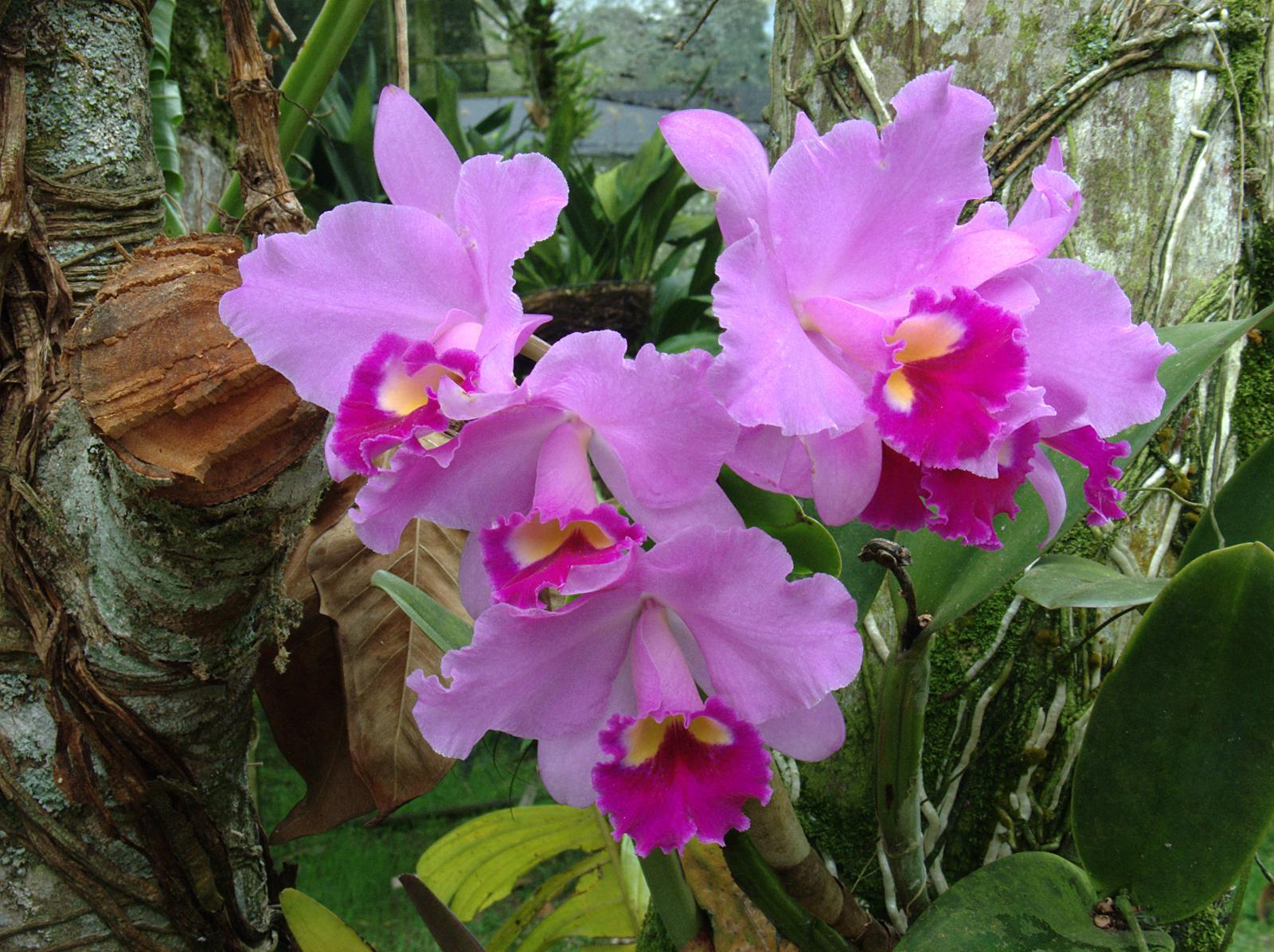 Consejos tiles para el cultivo de orqu deas for Arboles plantas y flores