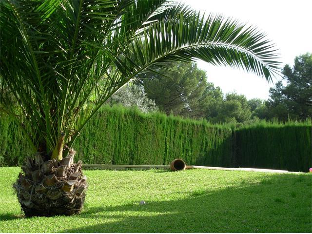 Tipos de palmeras for Palmeras de exterior