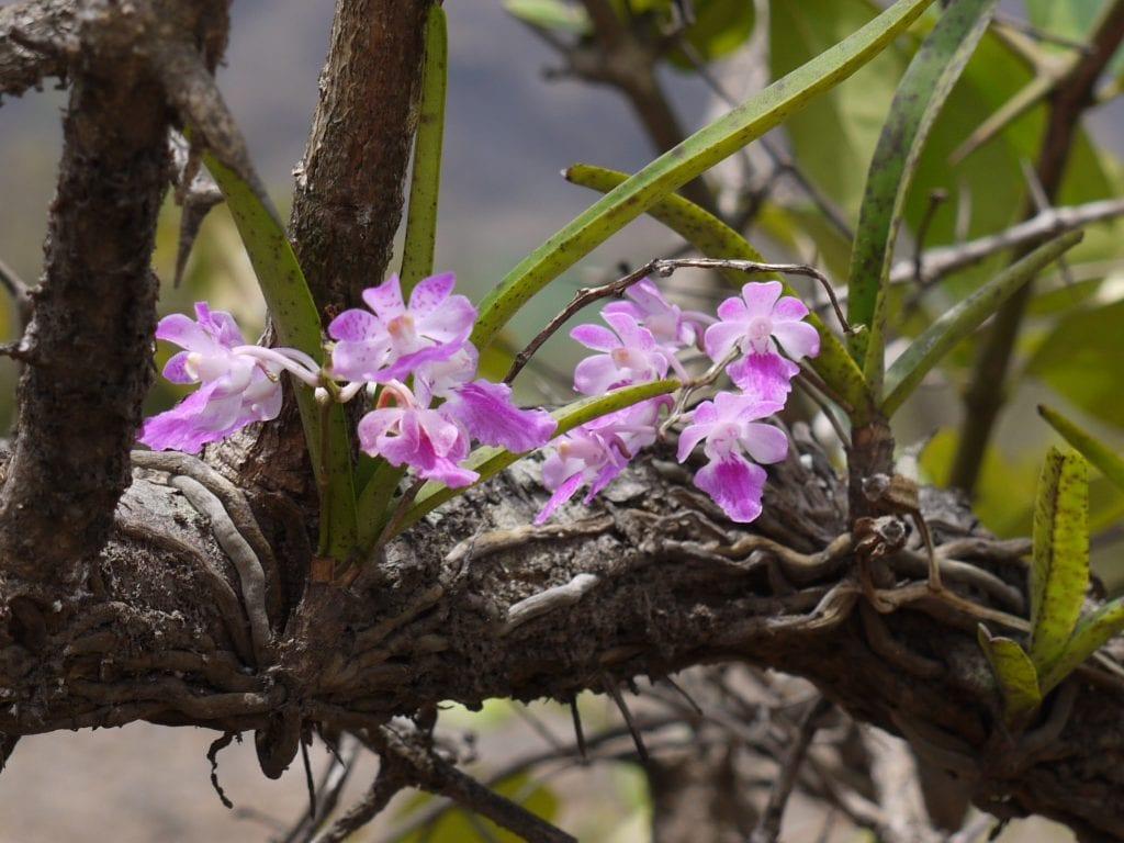 La orquídea se puede poner en un árbol