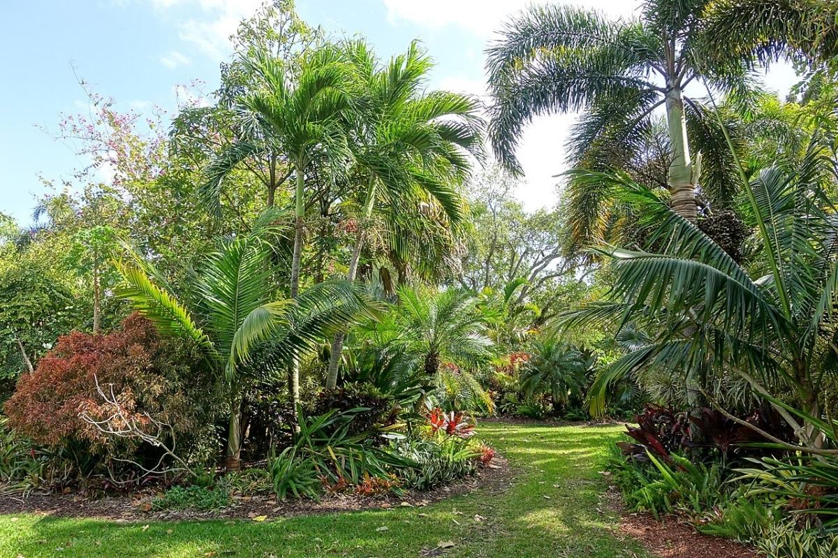 Hay muchos tipos de palmeras que puedes cultivar