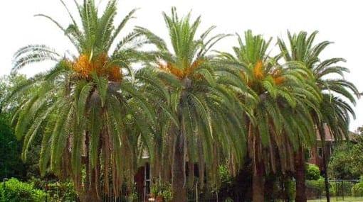 Cultivo de palmeras en exterior - Tipos de plantas de exterior ...