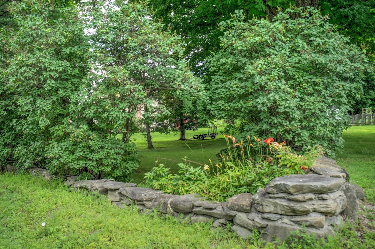 Hay muchas plantas de interior y otras que es mejor cultivar en el exterior