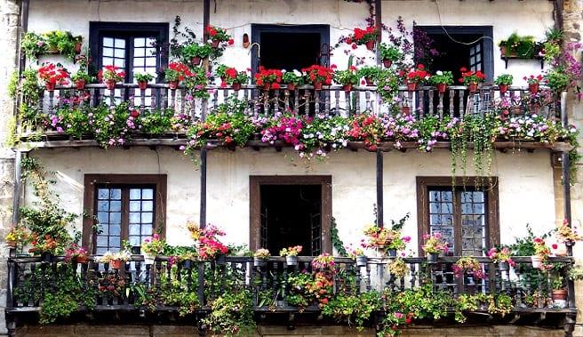 Las mejores plantas para el balc n for Plantas para balcones