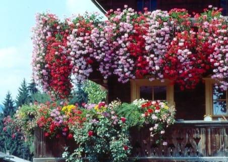 Las mejores plantas para el balc n for Plantas de balcon para todo el ano