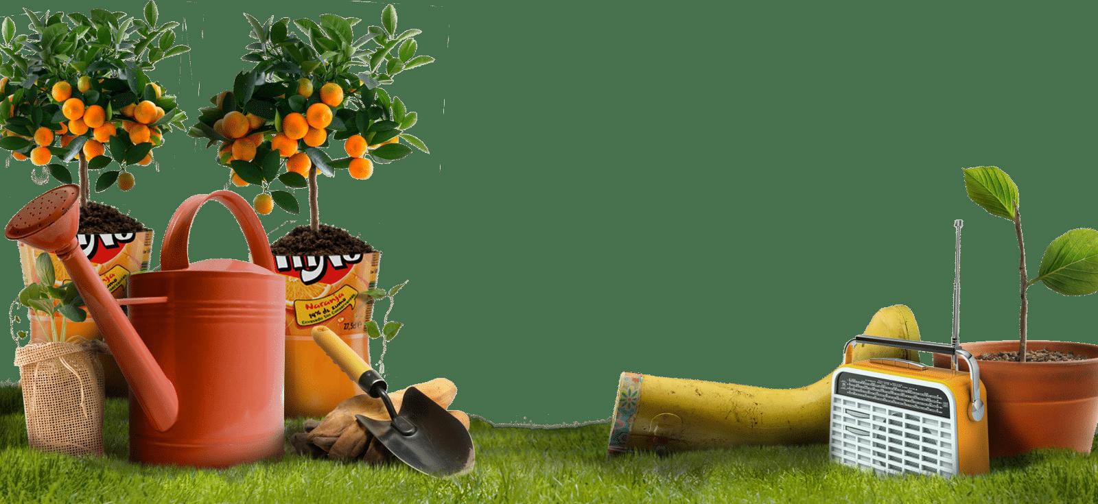 C mo cultivar frutas y hortalizas en macetas - Plantar arboles frutales en macetas ...