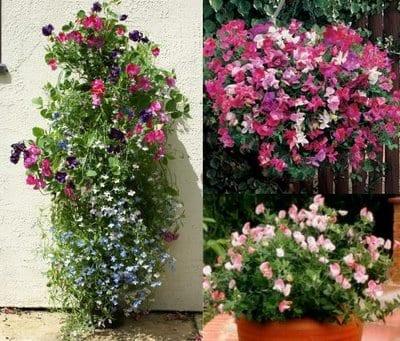 Cultivar plantas colgantes - Plantas colgantes de exterior ...