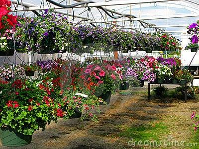 cultivar plantas colgantes - Plantas Colgantes Exterior