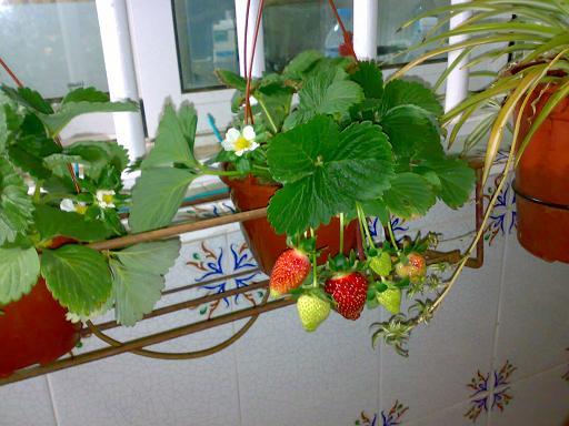 cómo cultivar frutas y hortalizas en macetas?