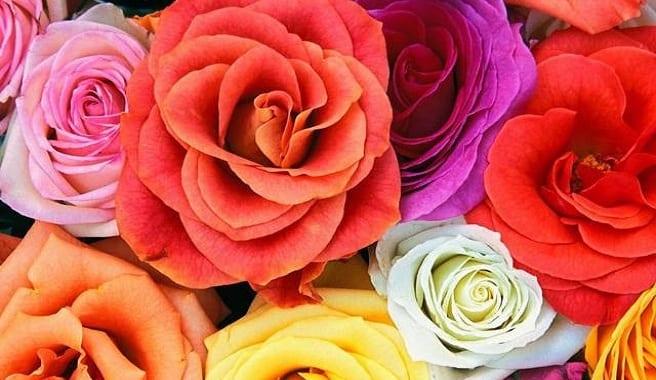 latest simple cmo teir flores with flores preciosas with fotos flores preciosas - Fotos De Flores Preciosas