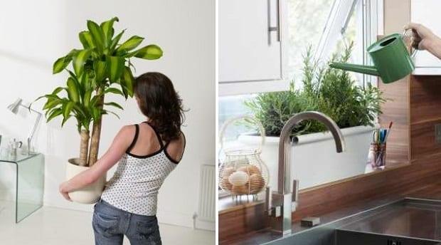 Abonar plantas de interior - Plantas decorativas de interior ...
