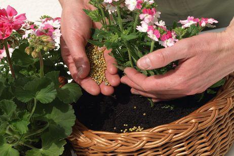 abonos para plantas en macetas
