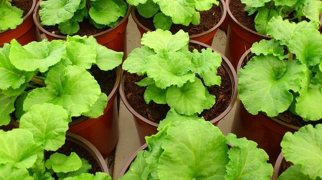 Abonos para plantas en macetas for Plantas en macetas
