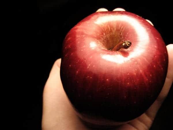 Los Gusanos En Las Manzanas