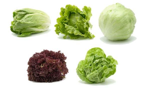 Las distintas variedades de lechugas caracter sticas b sicas - Diferentes ensaladas de lechuga ...