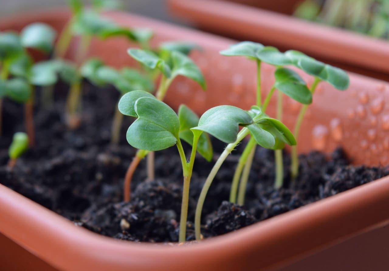 Las jardineras se pueden usar para sembrar