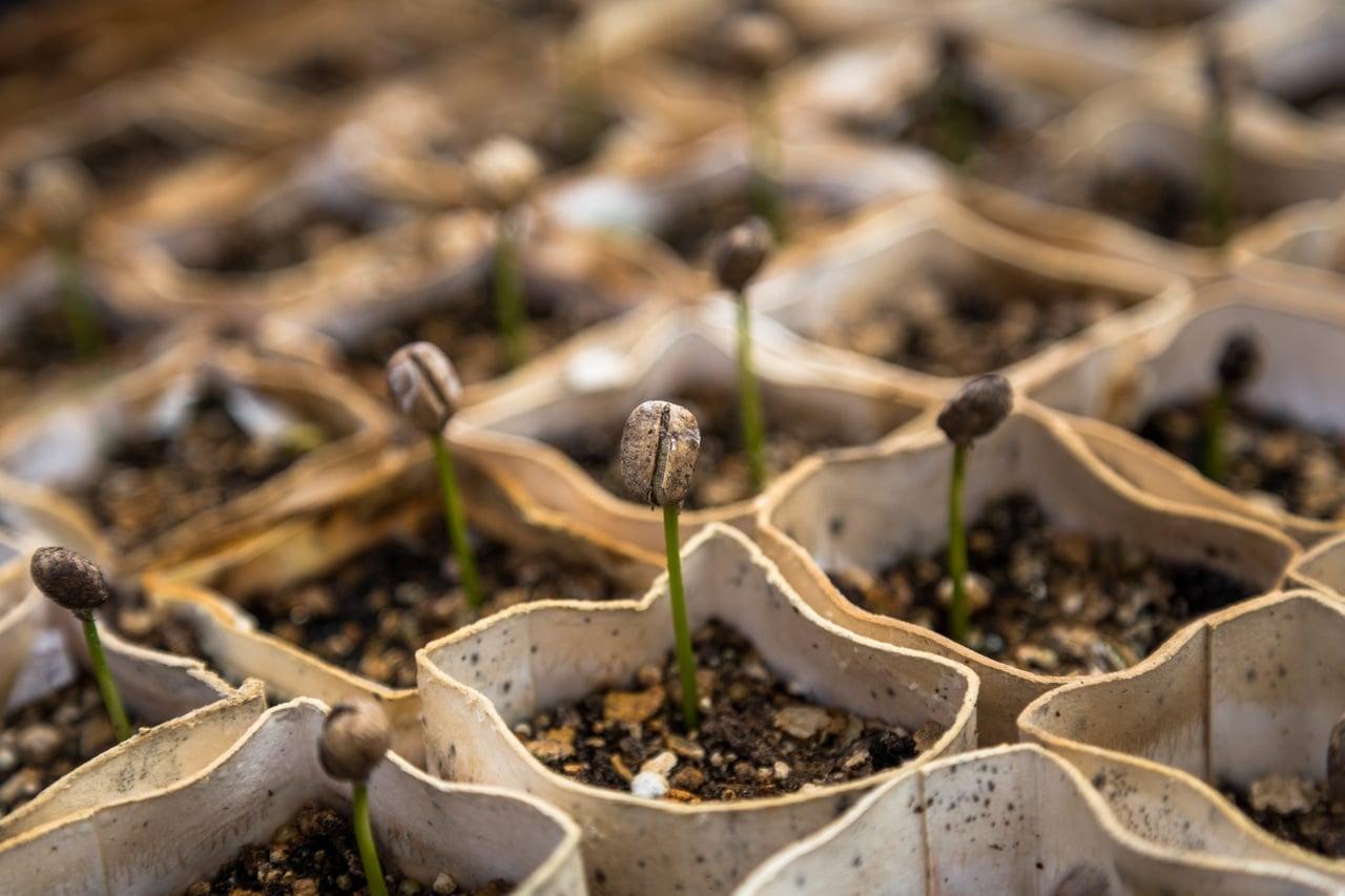 Los semilleros te permiten cultivar muchos tipos de plantas