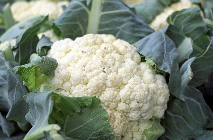 La coliflor es una planta comestible