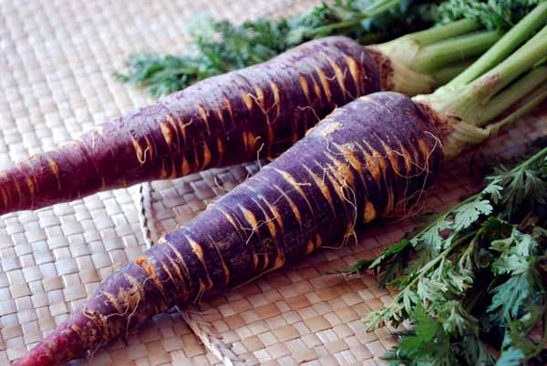 Zanahorias Moradas Y Zanahorias De Colores Jardineria On Actualmente se ha puesto de moda volver a cultivar zanahorias de colores. zanahorias moradas y zanahorias de
