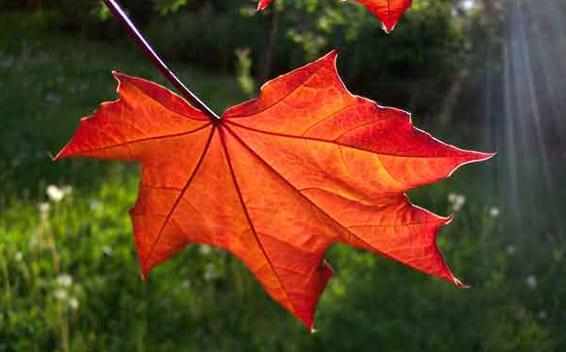 Hoja de árbol en otoño