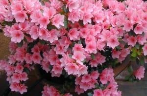 10 plantas primavera