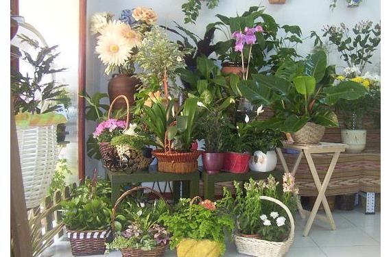 Plantas interior primavera