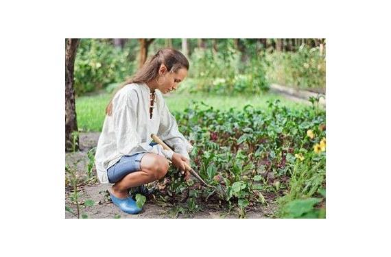 Trucos para abonar el jardin
