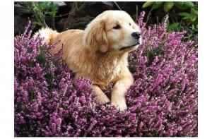 Perros y plantas