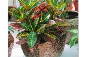 Trasplante plantas interior