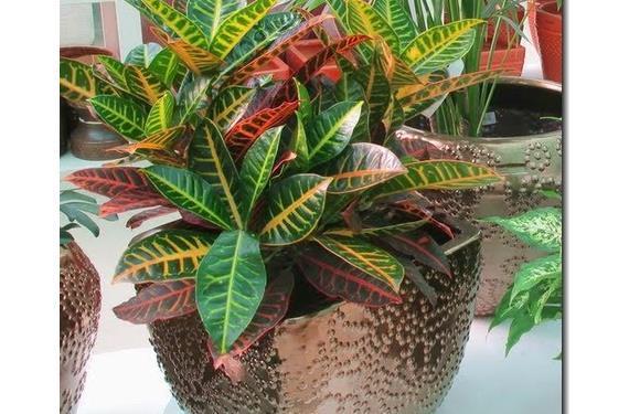 Traplante plantas de interior