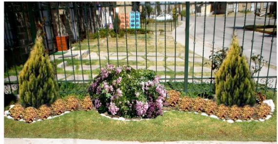 Ventajas de los arbustos ornamentales for Arbustos ornamentales de exterior