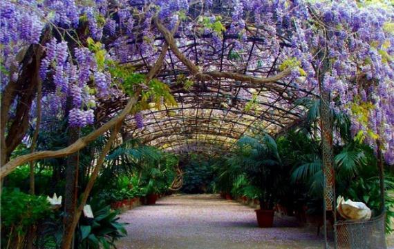 La magia de las enredaderas o trepadoras for Plantas trepadoras para muros