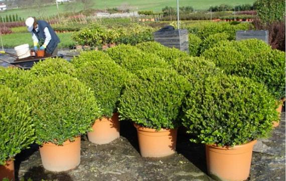 Consejos para plantar arbustos en tu jard n for Arbustos para macetas exterior