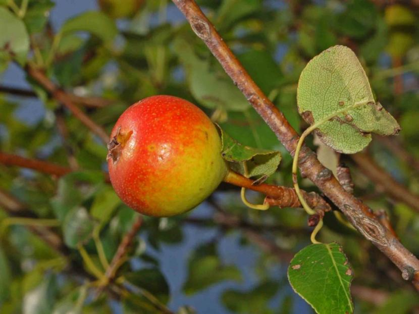 Fruto de un árbol