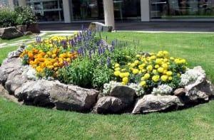 Flores recogidas por rocas