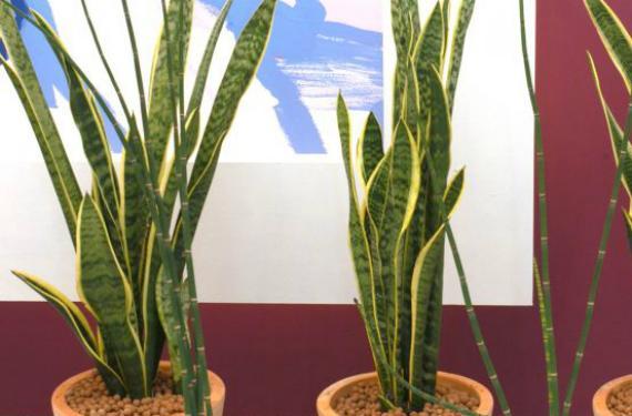 Plantas de interior que no necesiten luz cool cmo cuidar plantas de interior with plantas de - Plantas de interior que no necesitan luz ...