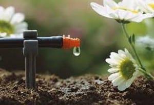 Drenaje jardín
