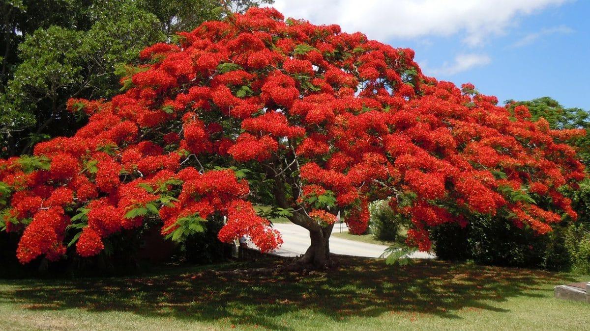 Cuando un árbol florece, ya se considera maduro